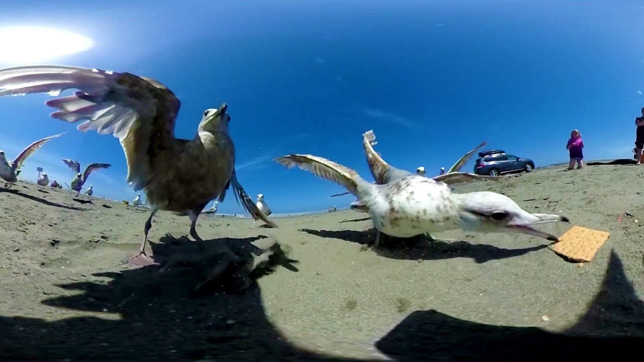 Fun At the Beach in 360 using the Ricoh Theta! CRAZY SEAGULLS! :)